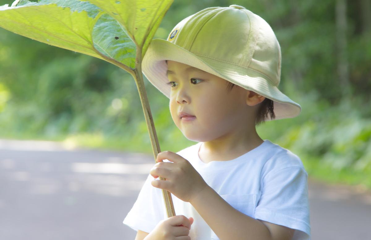 これだけ暑いとフキノトウも日傘に