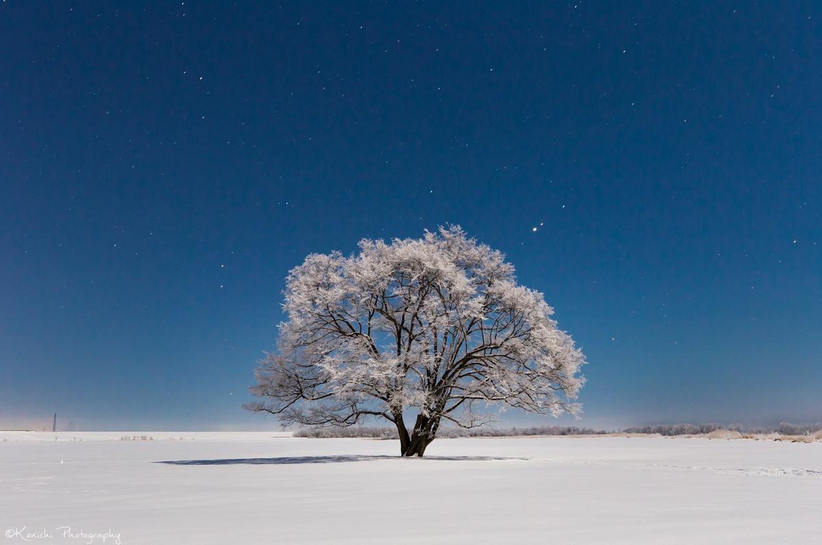 月明かりに照らされる霧氷をまとったハルニレの木