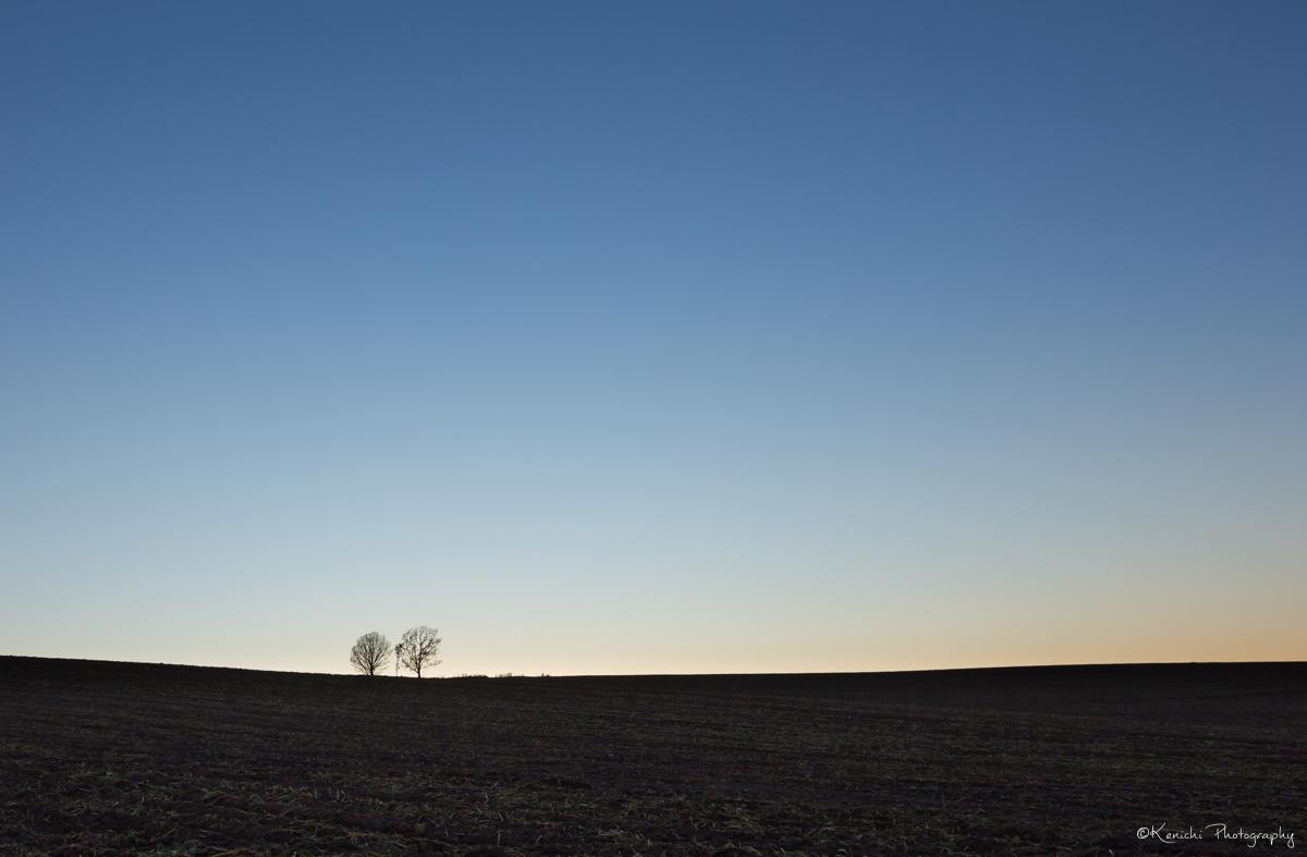 夕暮れ前の親子の木