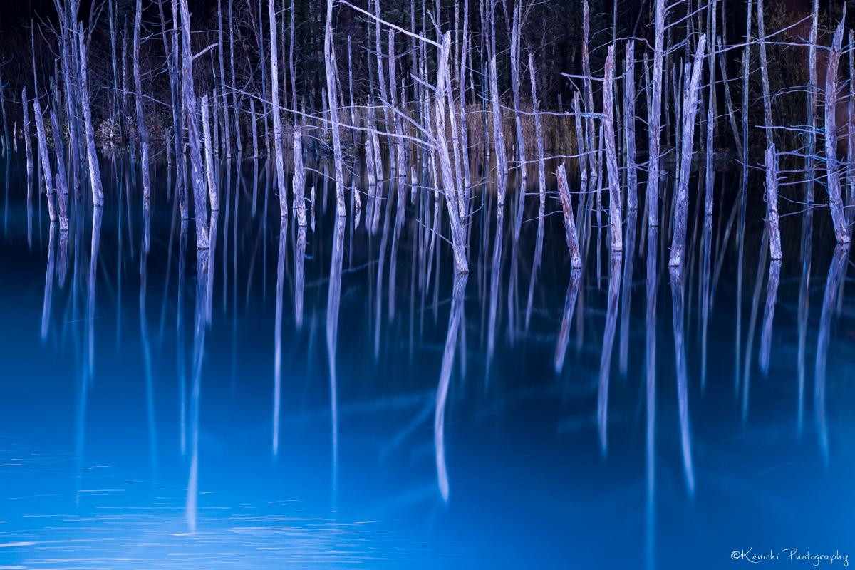 青い池のライトアップ見てきました!