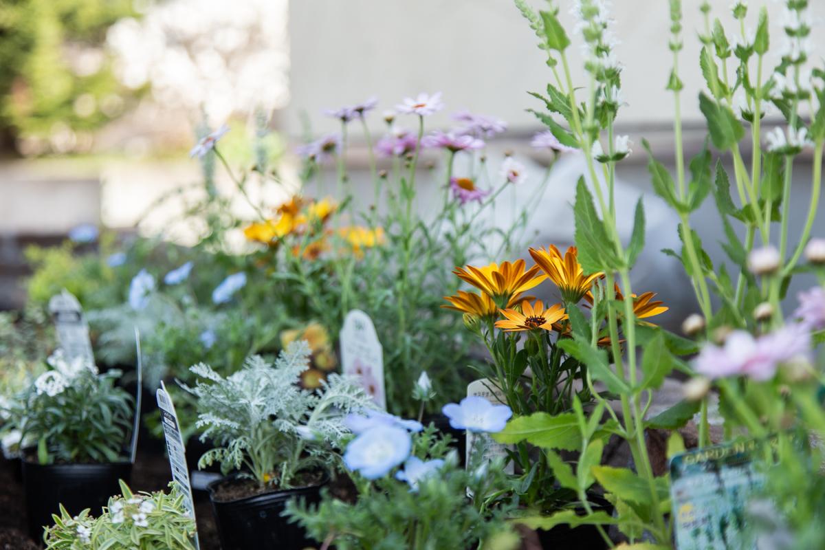 ガーデニング初心者が自作花壇に花を植える